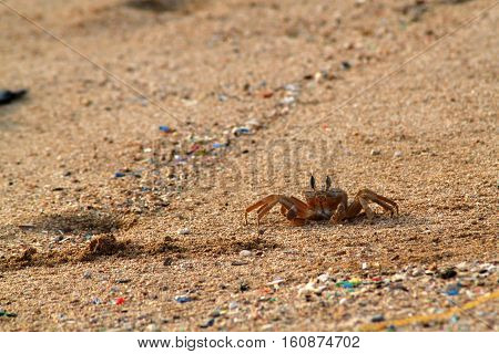 A crab crawling on sand and staring at the camera.