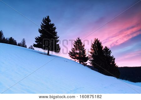 spruce trees on snowy hill at sunrise Germany