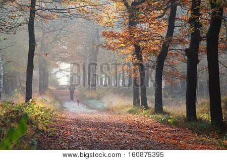 owner with dog walking in autumn forest Netherlands