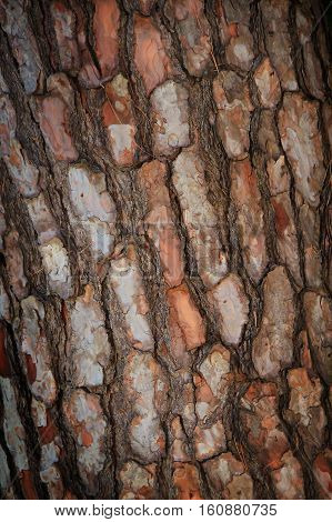 Background of the surface of natural wood