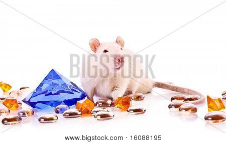 White rat posing over white background with gems poster
