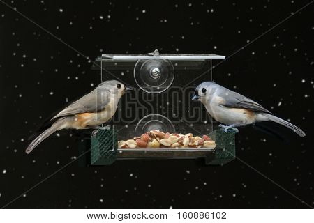 Tufted Titmouse (Baeolophus bicolor) on a window feeder in light snow