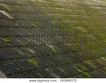 Moss On Old Roof