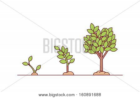 Growing tree seed with green leafs. Young sprouts rising from good fertilised soil. Growth stages. Modern flat style thin line vector illustration isolated on white background