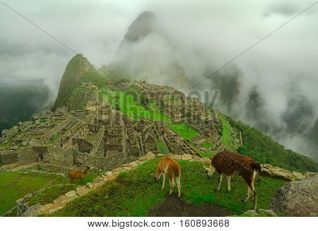 Llamas sometimes get in the way of the photo ops in Machu Picchu.