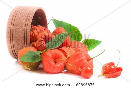 husk tomatoes with leaves in wooden bowl isolated on white background.