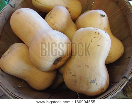 Basket of butternut squash at a farm stand