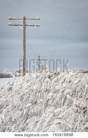 Telegraph poles recede in the distance in a frozen winter wonderland.