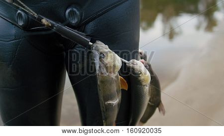 Spear fisherman shows Freshwater Fish on the belt of underwater fisherman after hunting in forest river, close up