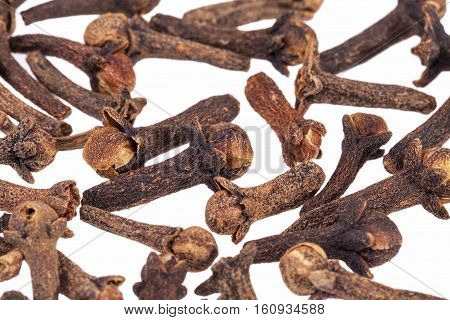 Dried cloves isolated on white background close up.