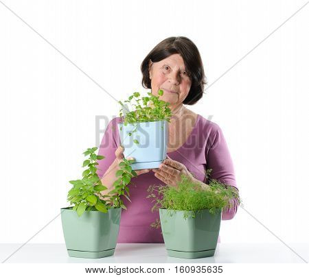 Elderly Woman With Herb Seedlings In Pots.