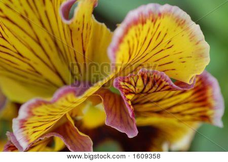 Inside Flower3