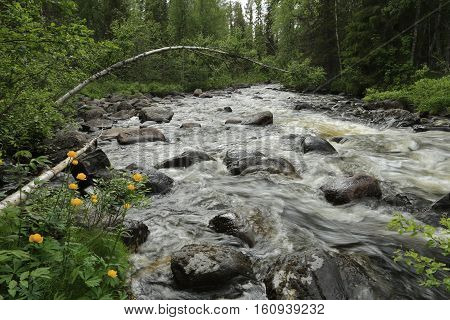 Russia, Karelia, the taiga, rocky river Mutko