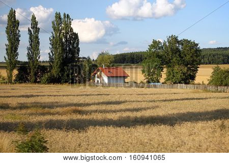 A solitary house in a hay field among green trees.