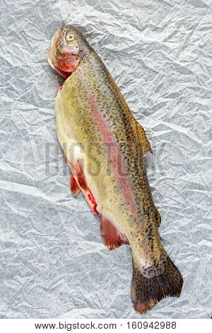 Raw Rainbow trout eviscerated and Ready to cook.