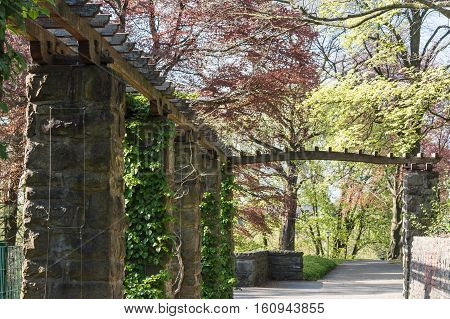 Wooden pergola covered with ivy in a park.