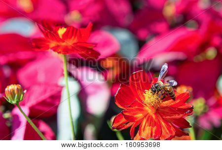 The red flowers and Insects in the park