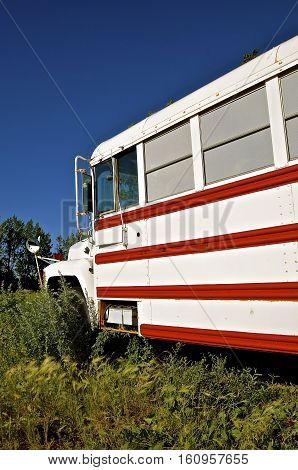 A colorful school bus converted into a camper is left deserted in the weed patch.