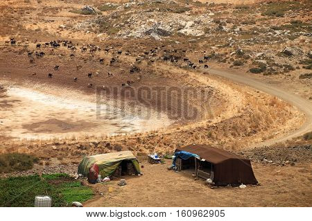 Goats surrounding tents in Lebanese mountains for the homeless refugees and Bedouins.