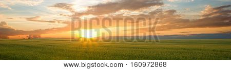 Beautiful landscape at sunset. Green wheat field at sunset, border design panoramic banner