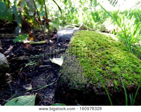Moss on rocks in formal garden green peaceful zen tranquility card or nature background with room for copy selective focus and sunlight in shade