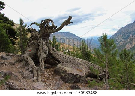 The view of tangled tree roots with mountain landscape on background.
