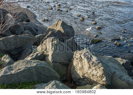 Seagulls wade in the water near large rocks in the Pacific Northwest.