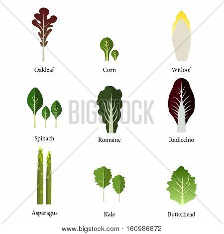 Set of salad bowl. Leafy vegetables green salad. Vector EPS 10