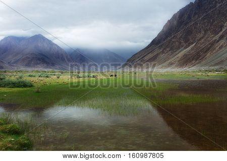 Natural Landscape In Nubra Valley