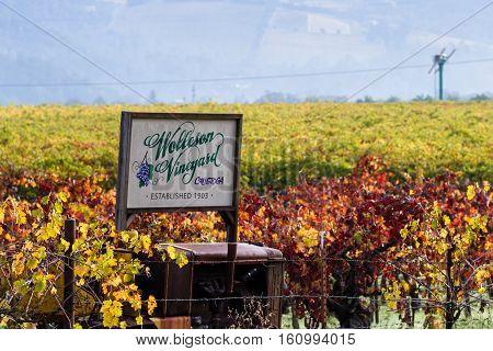 Calistoga California - November 11: Autumn vineyard behind the Wolleson Vineyard sign. November 11 2016 Calistoga California.