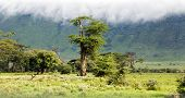 Primordial beauty of nature is in the valley of Ngorongoro Crater Conservation Area, Tanzania. East Africa poster