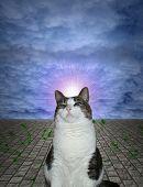 Proud Cat poster