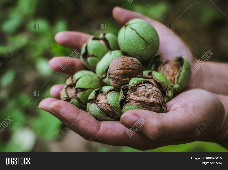 Fresh Harvest Ripe Image & Photo (Free Trial) | Bigstock