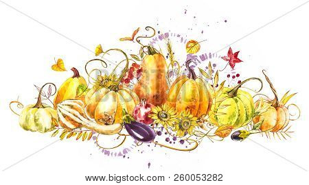 Pumpkins Composition. Hand Drawn Watercolor Painting On White Background. Watercolor Illustration Wi