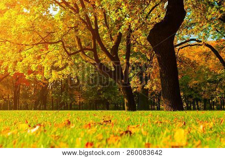 Fall picturesque landscape. Fall trees with yellowed fall foliage in sunny fall October park. Colorful fall landscape in vivid tones
