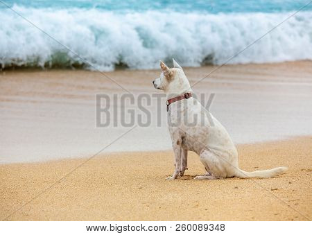 Dog Sitting In Waiting Near The Ocean