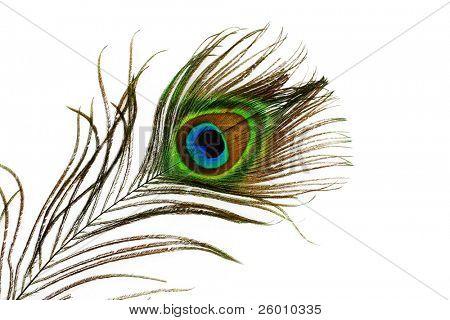 Detalle del ojo de pluma de pavo real sobre fondo blanco