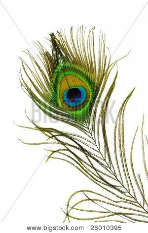 Detail of peacock feather eye on white background