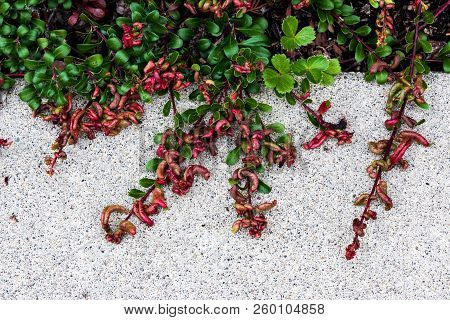 Plant Growing Over A Concrete Sidewalk In Daylight