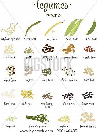 Vector Set Of Legumes And Beans In Flat Style Isolated On White