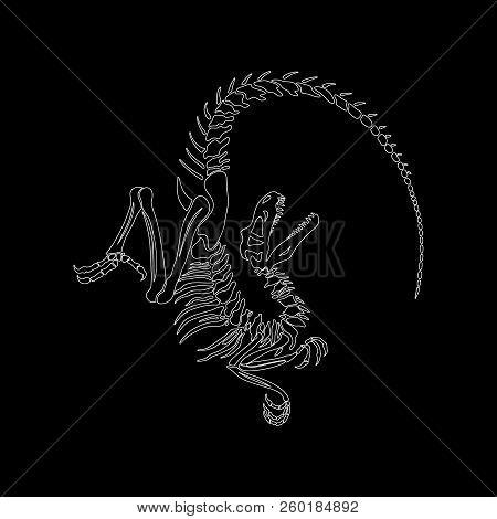 Graphic Print Of Velociraptor Skeleton On A Black Background