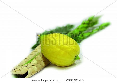Lulav On Sukkot