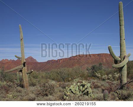 Sahuaro National Monument Mountains And Saguaro Cactus