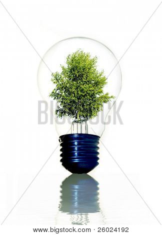 Tree in light bulb symbolizing green energy