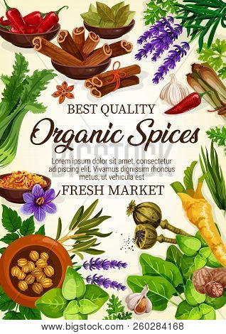 Organic Spices Herbs And Plants. Vector Chili Pepper, Onion Leek Or Anise And Oregano, Thyme And Ros