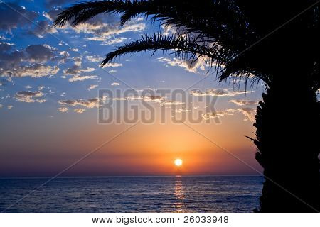 Sunset with the sea and palm trees