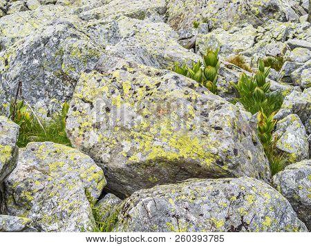Rila Mountains Terrain With Rocks And Mountain Plants, Detail, At Rila Mountains, Bulgaria - The Hig