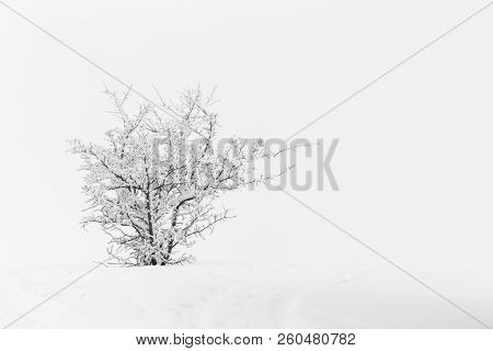 Cold Winter With Snowy Tree And Foggy Landscape