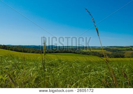 Herbs In The Field