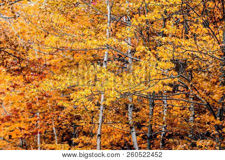 Yellow autum colors from nature